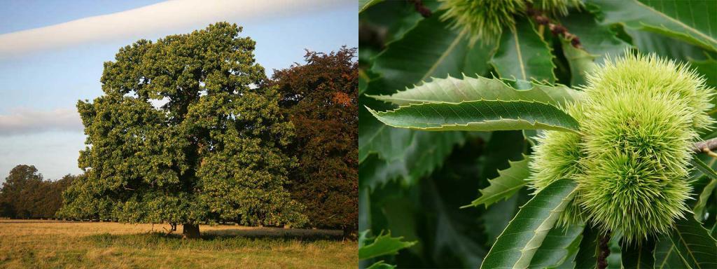 Erkennen laubbaum blätter Baumblätter bestimmen: