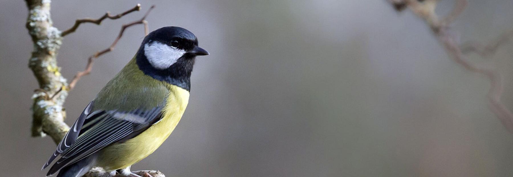 2752072ced8 Heimische Wintervögel: So erkennst du sie auf einen Blick ...