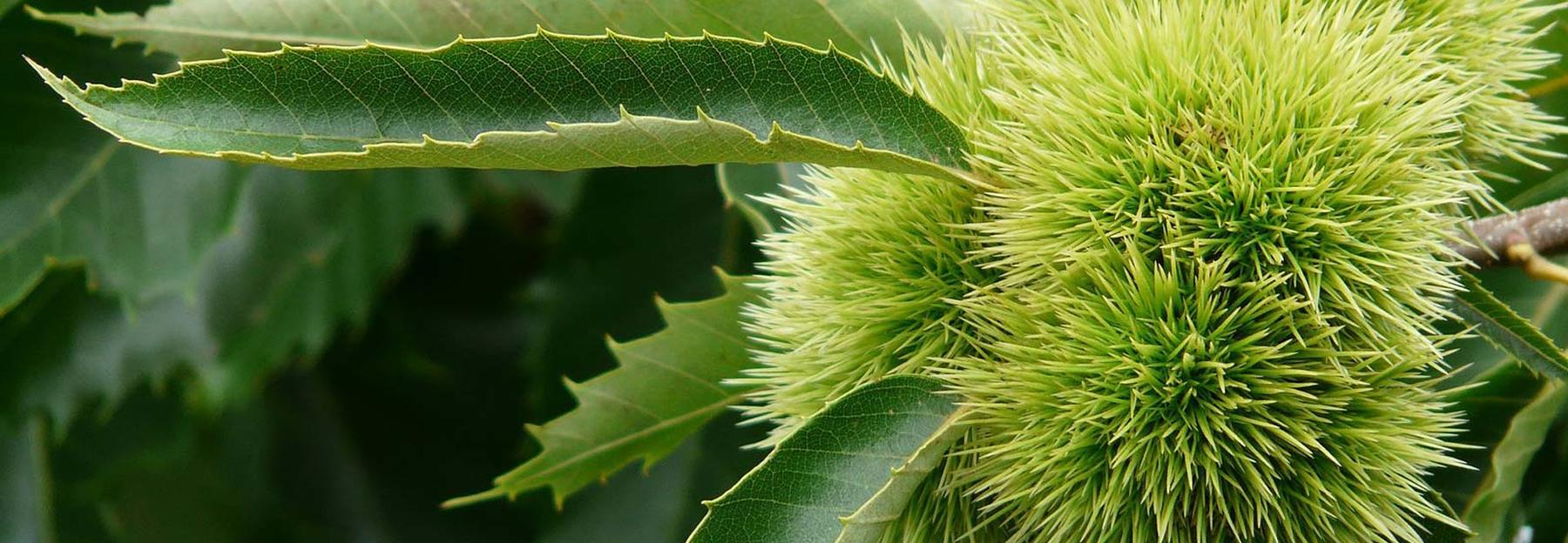 Blätter laubbäume übersicht