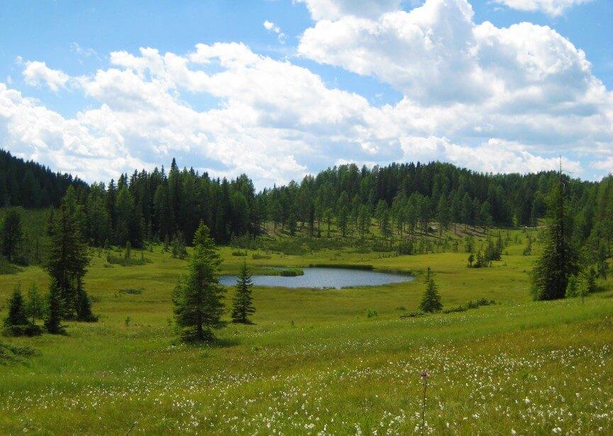 Ein Hoch dem Moor Überlinger Moor Biosphärenpark Lungau c Alois Essl