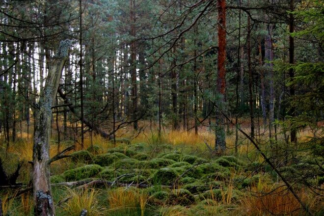 Ein Hoch dem Moor Hochmoor Schrems (c) Sonja Eder