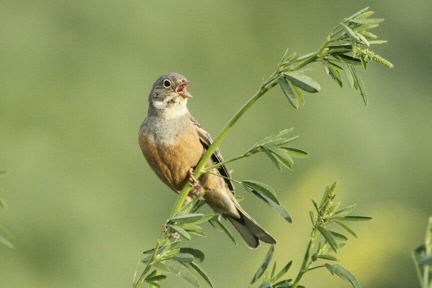 Zehn gefährdete und seltene Vogelarten (c) Michael Dvorak