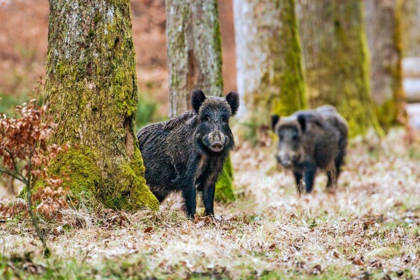 Tierstimmen erkennen / www.voglwild.com