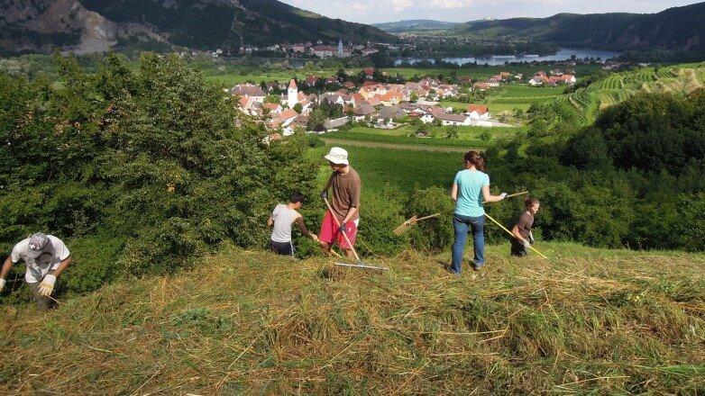Naturschutz Wachau