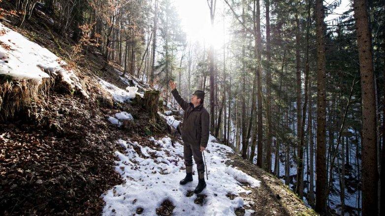 Bergbauer Ellmauer im Wald