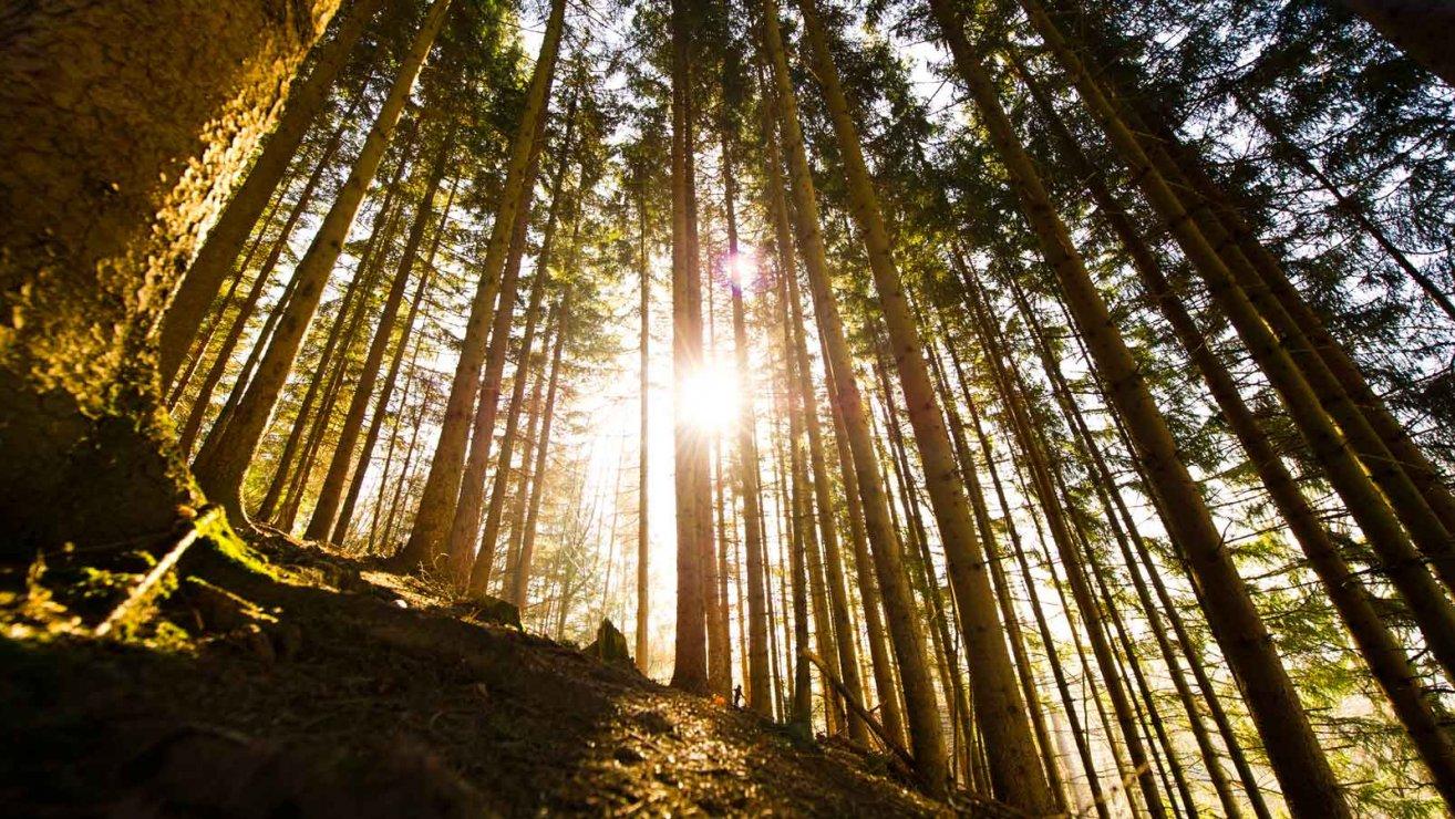 Holz Natur schützen mit Lanius