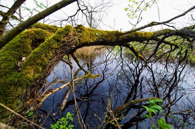 Naturschutz: Weidmoos Moor und Torf