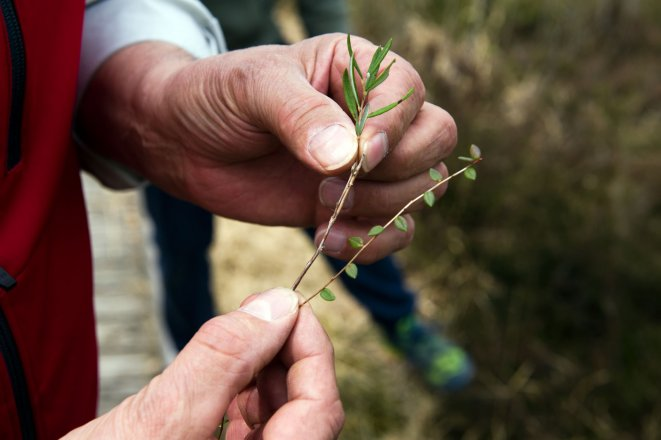Naturschutz im Weidmoos Moor