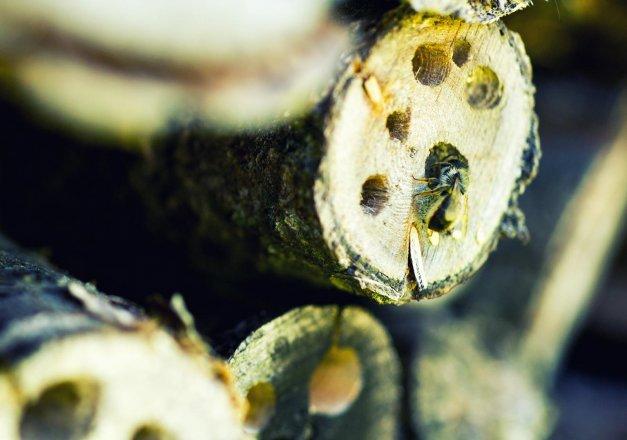 Natur braucht Bienen