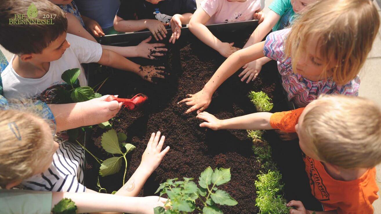 Naturschutz im Kindergarten_image