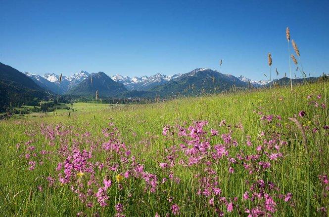 Wiesenblume Kuckucks-Lichtnelke
