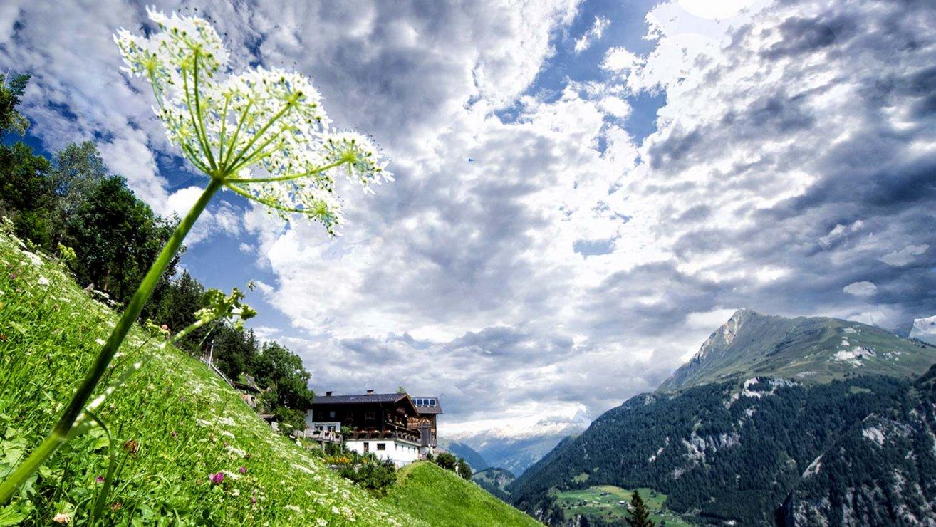Heilkraeuter in Osttirol
