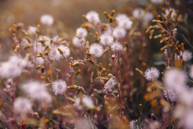 Herbstblumen Herbst Loewenzahn