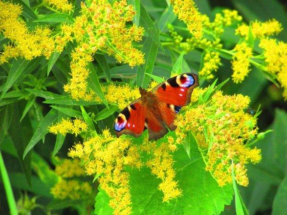 10 Wilde Herbstblumen Die Du Kennen Solltest Bluhendes Osterreich