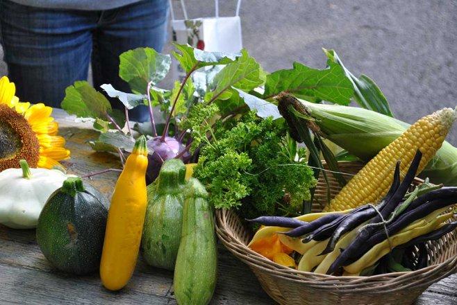 Cityfarm Wien Gemüse