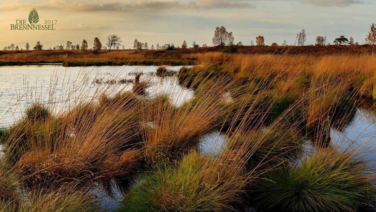 Brennnessel Moor