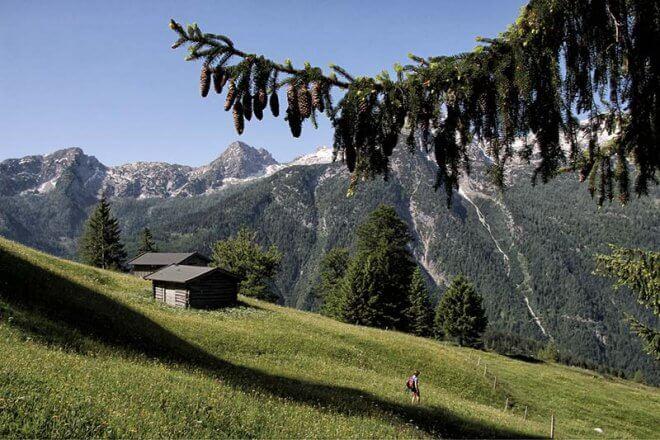 Brennnessel Gewinner Alpenverein Naturpark Weissbach