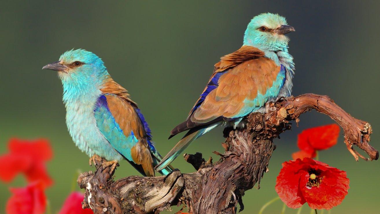 Zehn gefährdete und seltene Vogelarten (c) Michael Tiefenbach
