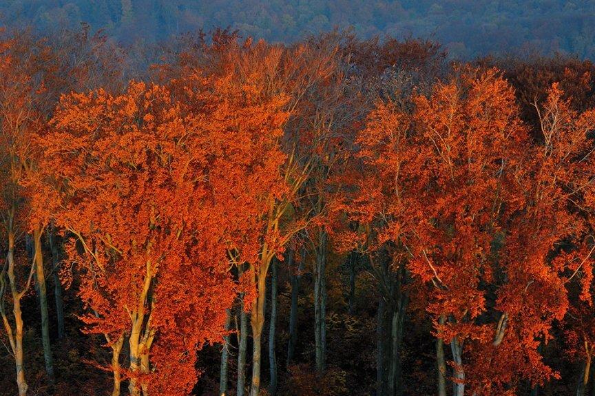 Wienerwald - Colors of fall at sunrise c Matthias Schickhofer/Brandstätter Verlag