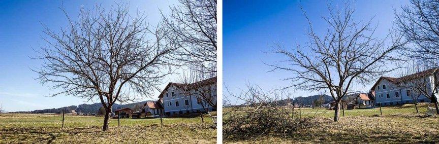 Obstbaumschnitt Streuobstwiese