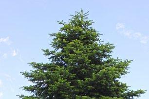 c Kuratorium Wald
