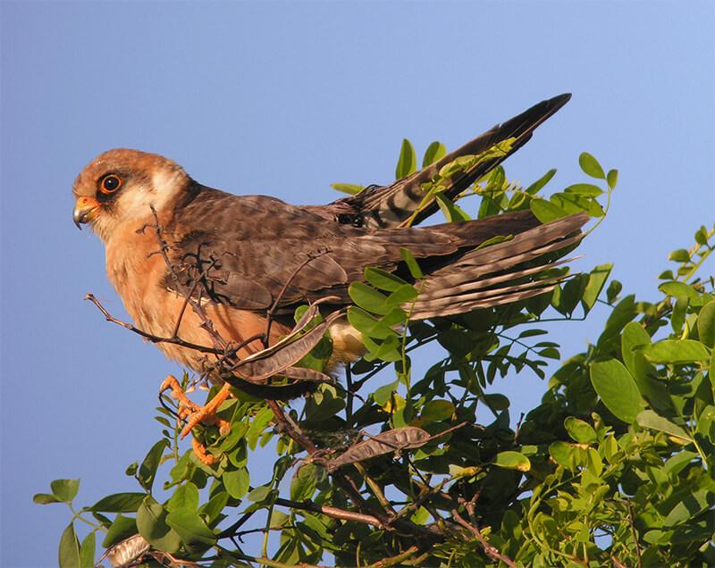 Zehn gefährdete und seltene Vogelarten (c) HM Berg