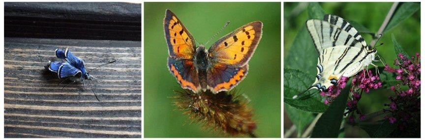 Schmetterlingsreport