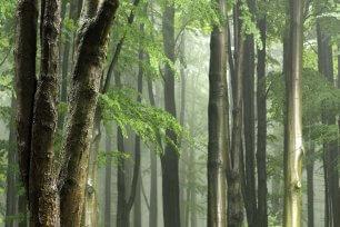 holz Wald