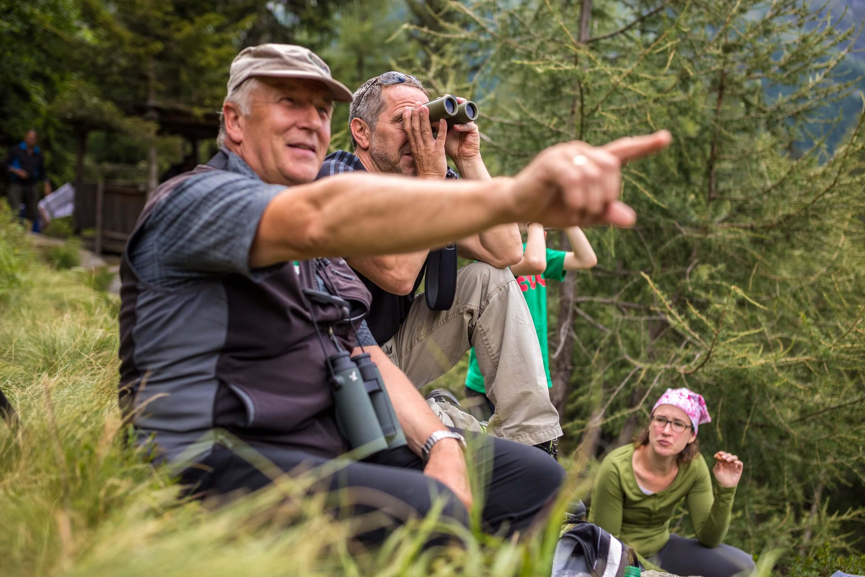 Wildnistour: dem rotwild auf der spur blühendes Österreich