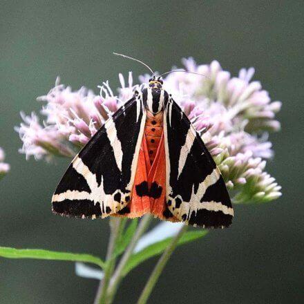 Schmetterlingszaehlung 2018