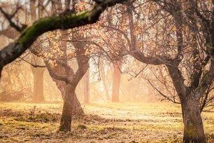 Obstbäume veredeln (c) Pixabay