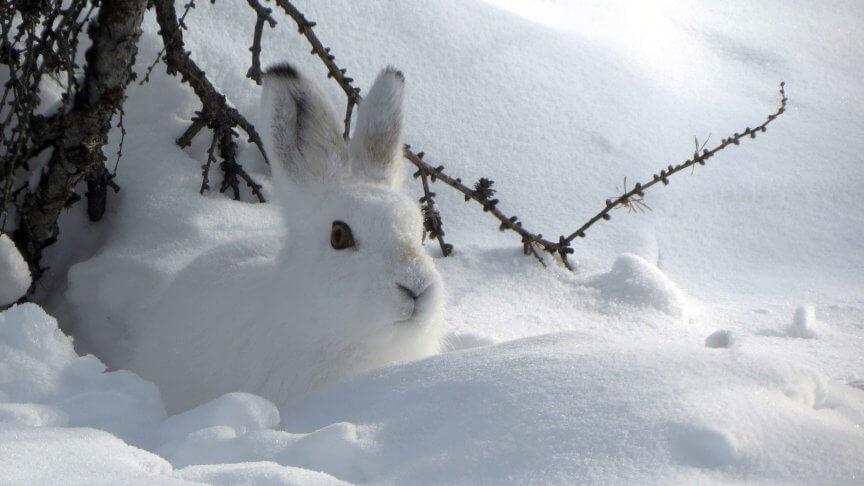 Tiere unter eis und schnee