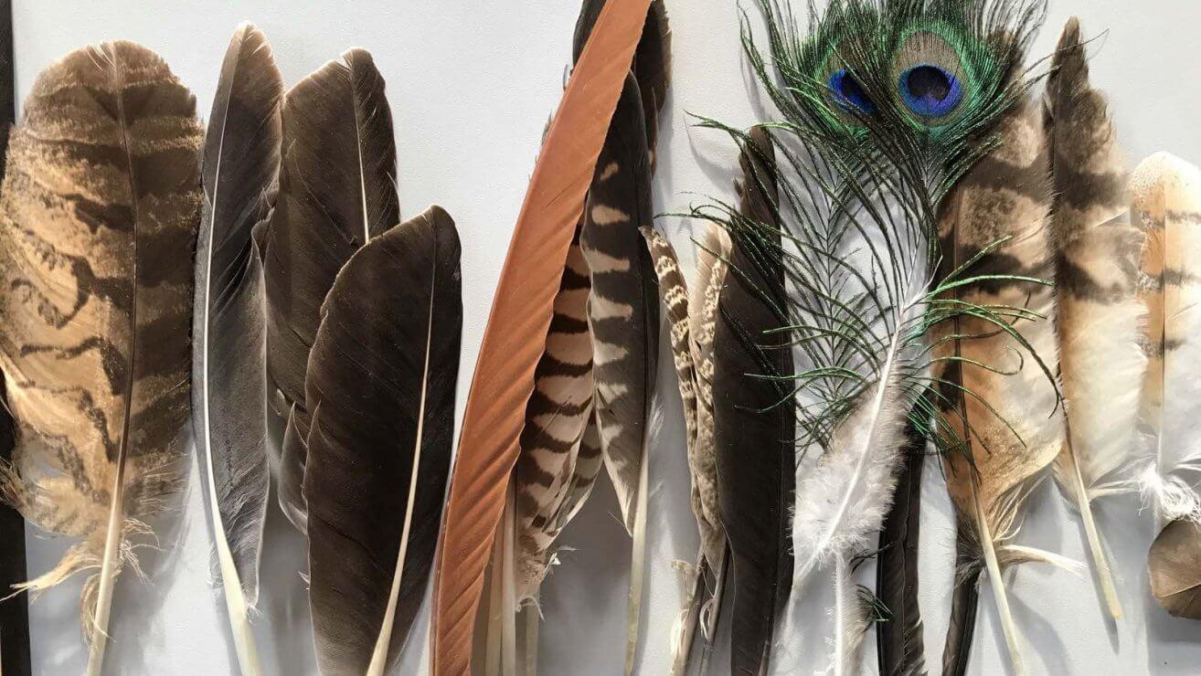 Die wunderbare Welt der Federn © Christina Schwann