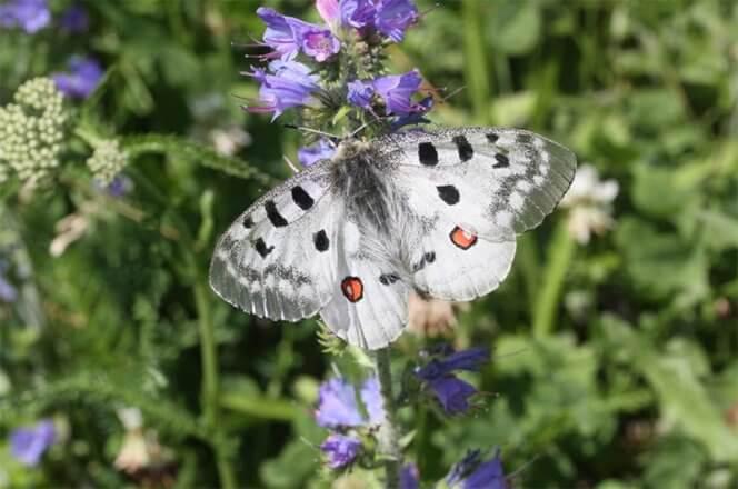 Schmetterligszaehlung 2018